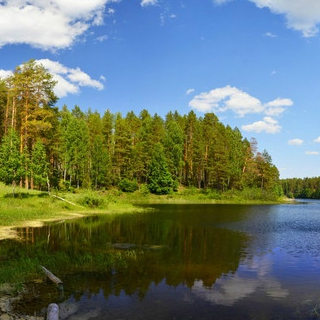 Заповедные леса Поволжья